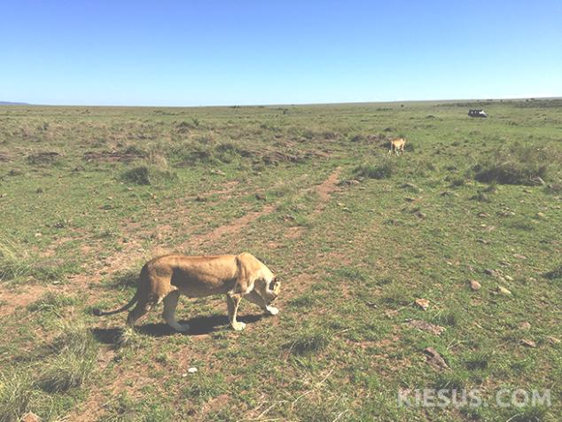 lions-kiesuscom